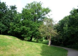 Redland-Green-ash-trees